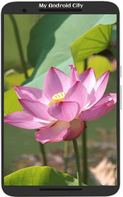 Lotus-Flower-Live-Wallpaper